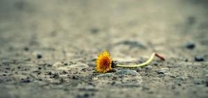 Psicoterapia del lutto